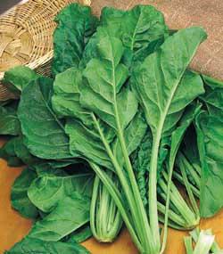 bietole beet greens
